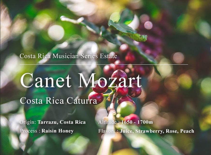 卡內特 音樂家系列 莫札特