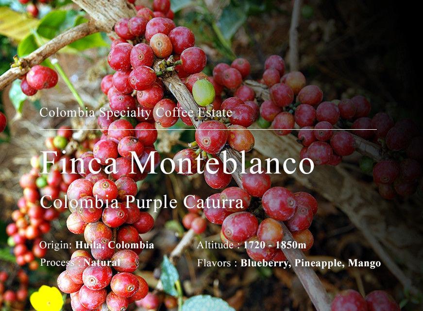 哥倫比亞 薇拉省 白朗峰莊園 羅德里戈.桑切斯小農