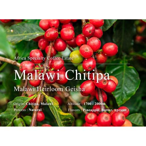 奇蒂帕 原生種